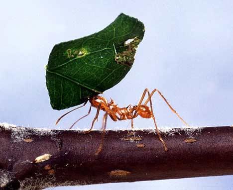 Belajar dari Kegigihan Semut