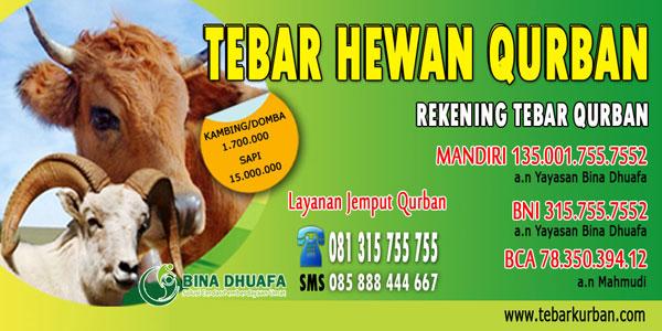 Harga Kambing Qurban 2013